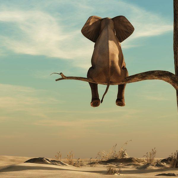 elephant sitting on a tree